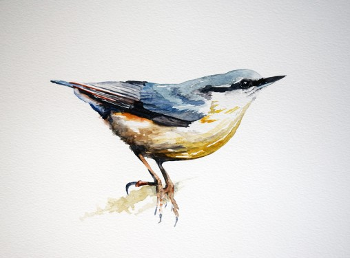 Nuthatch, watercolour