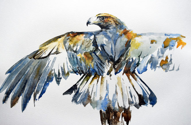 Golden eagle watercolour